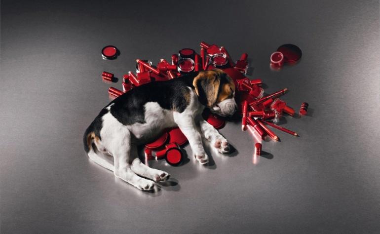Testowanie kosmetyków na zwierzętach – czy wiecie w jaki sposób się to odbywa?