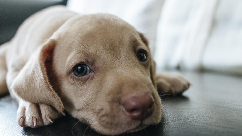 Co czuje pies gdy puszczasz fajerwerki