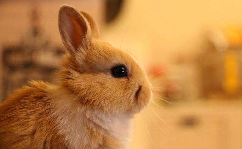 Testy na zwierzętach vs nieprawdziwe deklaracje firm kosmetycznych