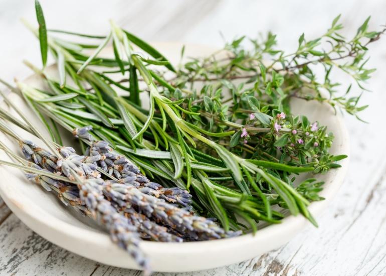 Zielnik kosmetyczny – zioła najczęściej stosowane w kosmetyce