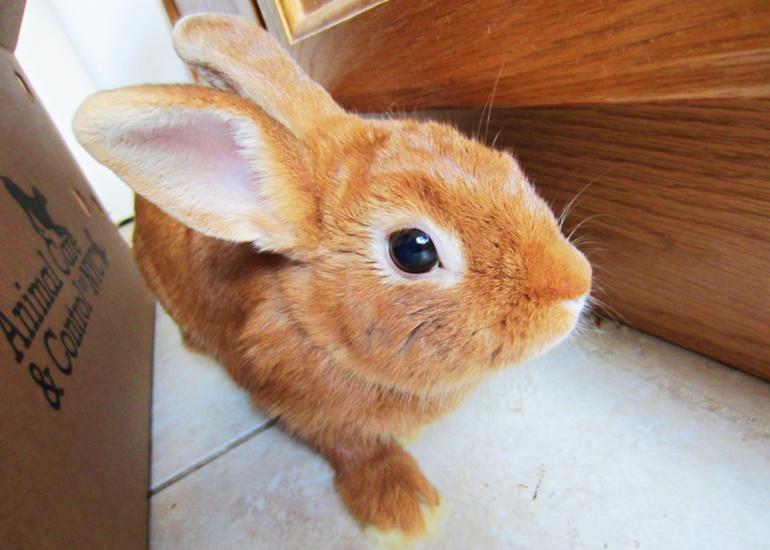 Testowanie kosmetyków na zwierzętach w Chinach – stan na 13.06.2020
